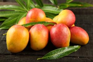 Fresh Mango Exporters