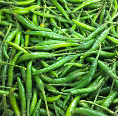 Green Chilli Exporter in India
